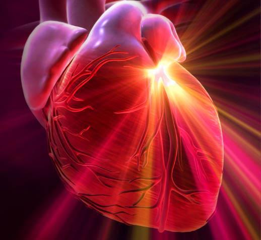 Женьшень при сердечно-сосудистых заболеваниях